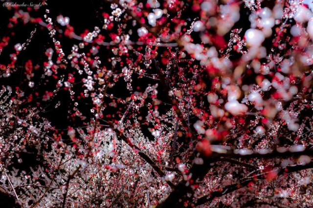 """Результат пошуку зображень за запитом """"Волшебная японская весна в фотографиях Хиденобу сузуки."""""""