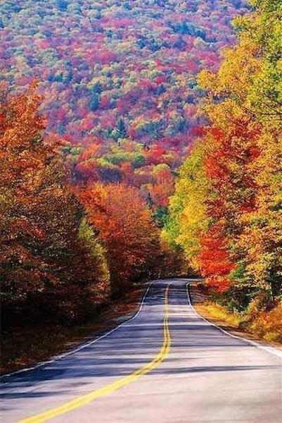 Осень на пороге ... Уходит Лето НЕ прощаясь, по - английски.. Набросив наскоро листвы цветную шаль.. ...