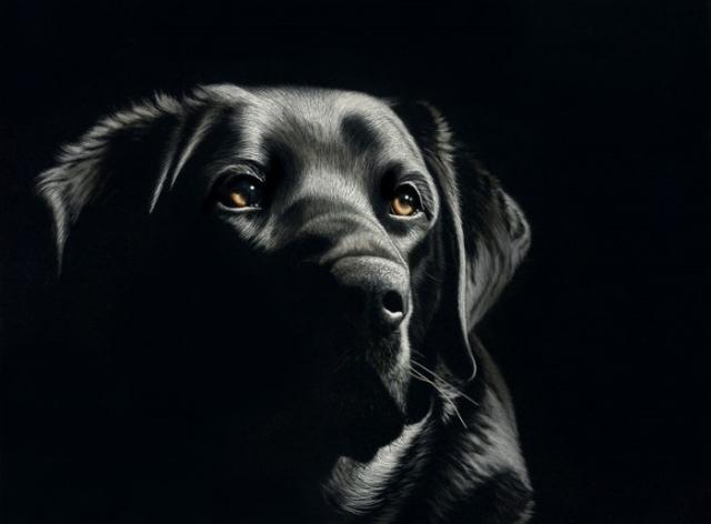 Портрет собаки выполнен при помощи сложной техники «скретчборд».