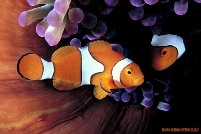 Как прекрасен этот мир (подводный мир 17 фото)