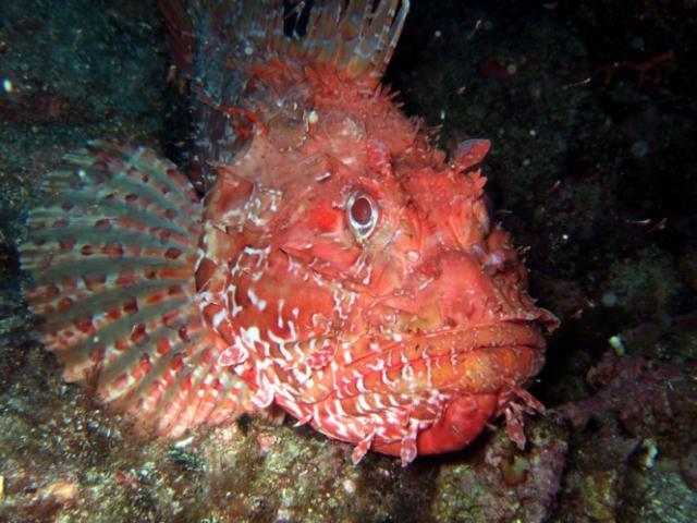Как не бояться уколов морского ежа, кактуса и прочих колючих напастей