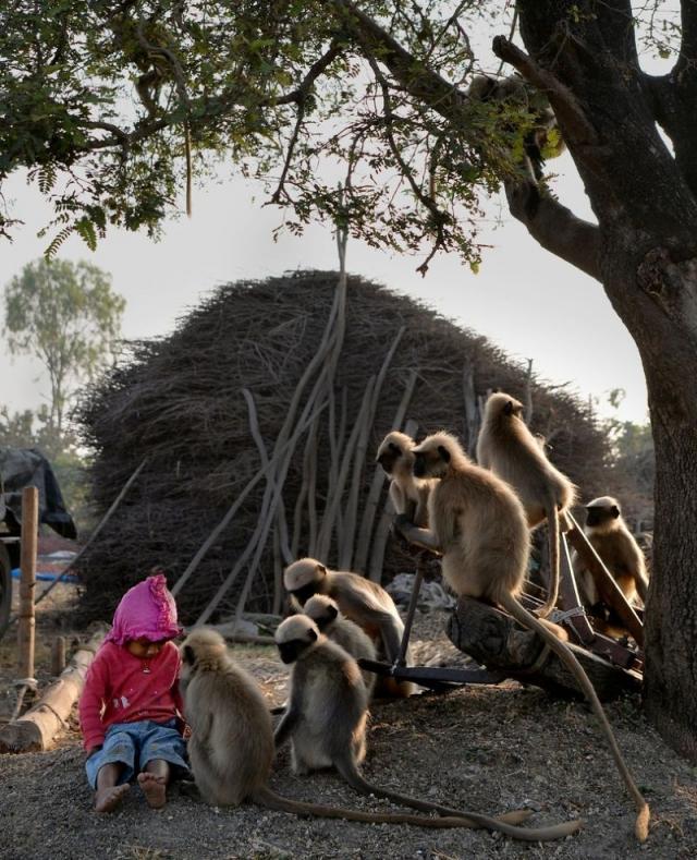Двухлетний пацан дружит со стаей обезьян