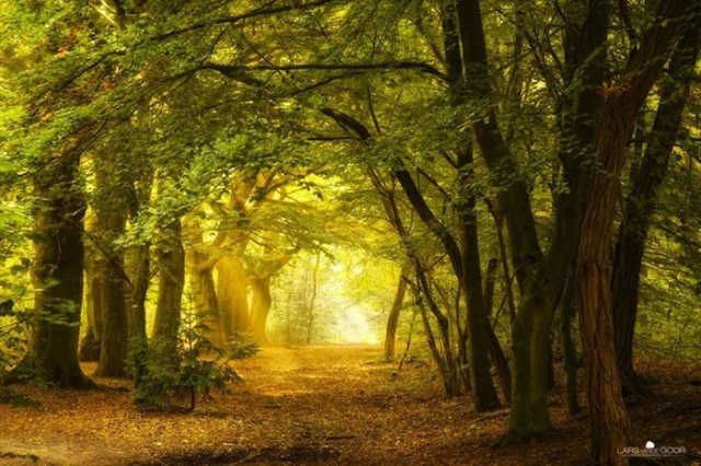 Снимки о том, как выглядит тишина природа, тишина, фотографии