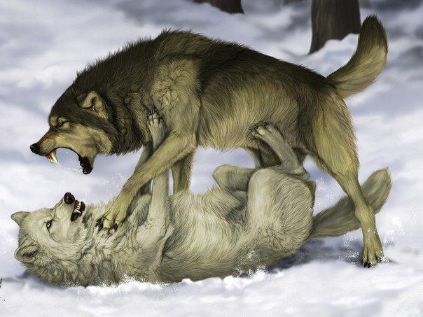 Мудрая притча про двух волков. Читается за 20 секунд, а запоминается на всю жизнь….Меня заставило ...