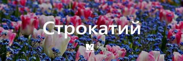 """Говори красиво: 10 """"весняних"""" українських слів, які вас надихнуть - фото 154887"""