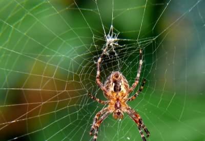 Названы потенциально опасные для человечества животные. Фото