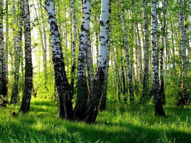 В краю берёзовом, где пахнет росами, Осталась юною душа моя, Где небо синее, трава с покосами, Где ... - 3