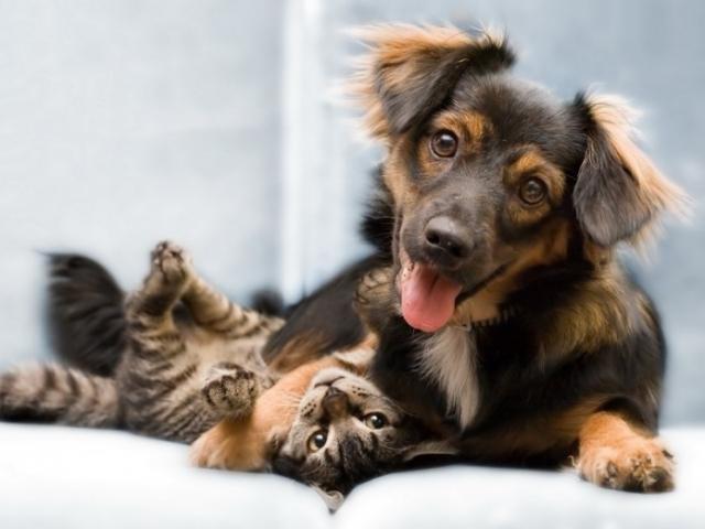 """Результат пошуку зображень за запитом """"Дневники кота и собаки."""""""