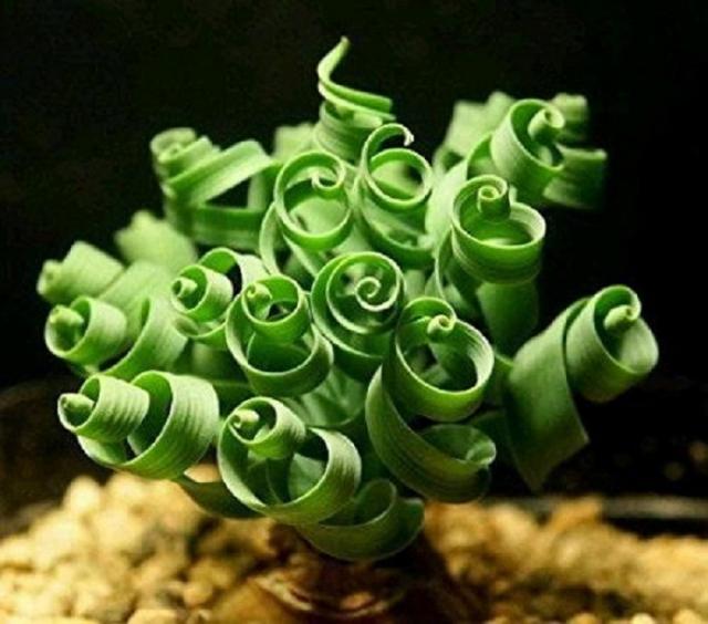 Листья необычного растения сотворила матушка природа.