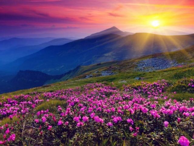 Интересные факты о цветах (часть 2)