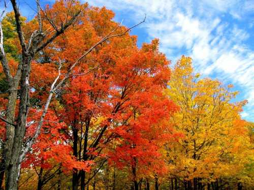 Добрые стихи про осень!