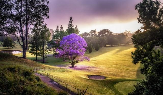 Самые фотогеничные деревья, которые очаруют вас своей красотой