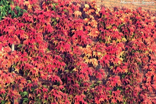 Фото: Яркие осенние пейзажи, от которых невозможно оторвать взгляд (Фото)