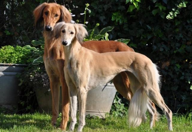 Лучшие друзья: 5 древнейших пород собак (ФОТО)
