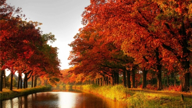оранжевая река