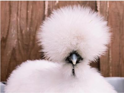 Этих животных можно назвать чудесами генетики. Фото