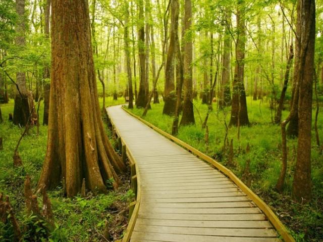 Национальный парк Конгари, штат Южная Каролина. Автор: Zach Holmes.