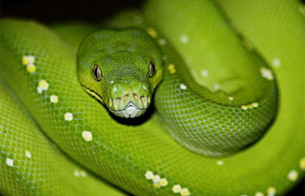 змеи_2