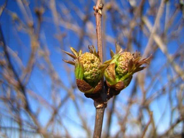 Первые шаги весны в Новгородской (фото)