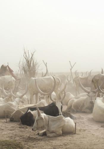 В 20 километрах от столицы цивилизацией и не пахнет, словно машина времени переносит тебя на века назад. На территории Южного Судана живет несколько племен с довольно традиционным укладом жизни. Динка — одно из них. На фото — пастухи племени