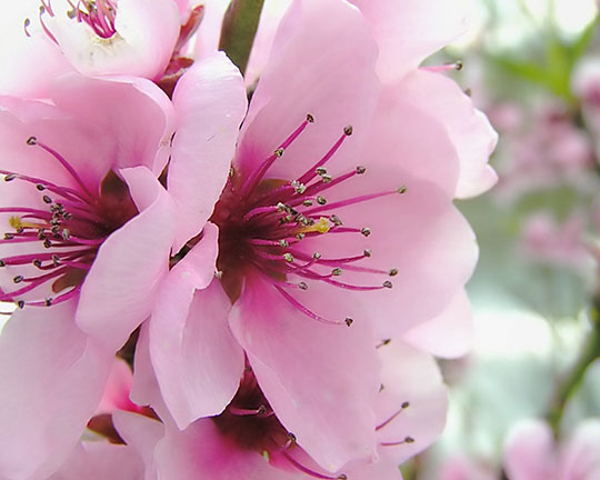 красивые цветы, букеты фото, картинки