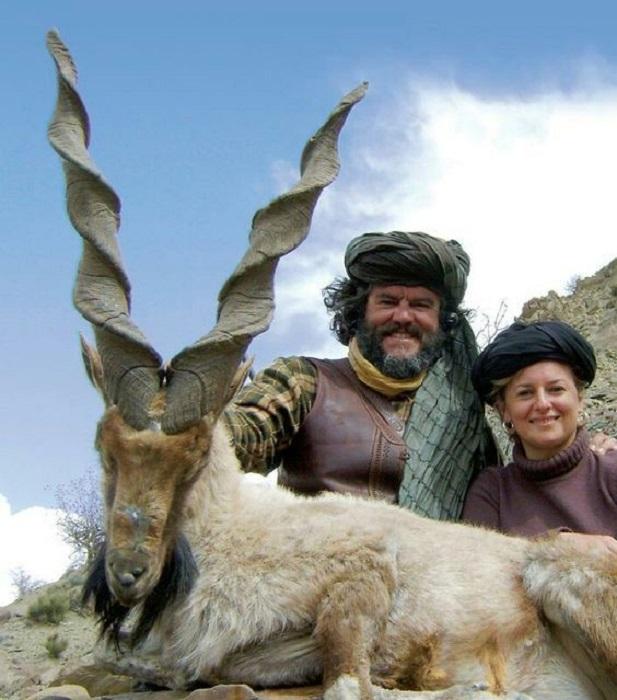 Мархур или винторогий горный козел с лёгкостью преодолевает отвесные ущелья, а рога, напоминающие винтовой штопор, придают животному статности и грациозности.