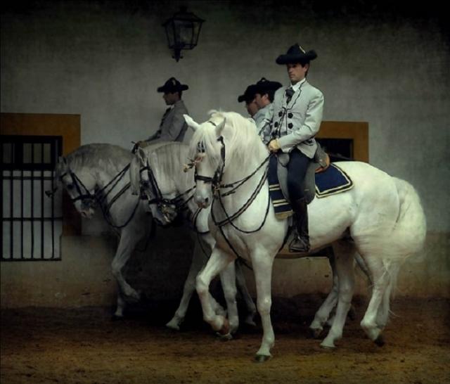 Элегантные лошади андалузской породы легко поддаются обучению.