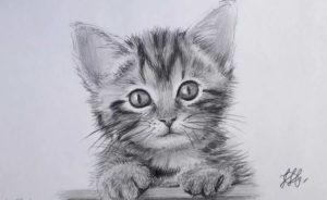 Картинки по запросу фото милого котика