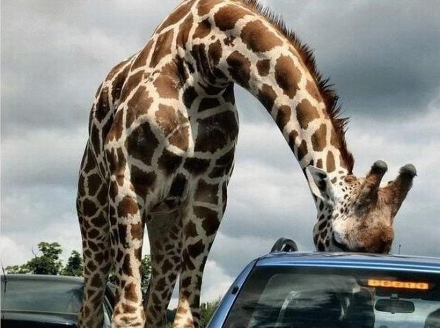 Приколы про животных фото