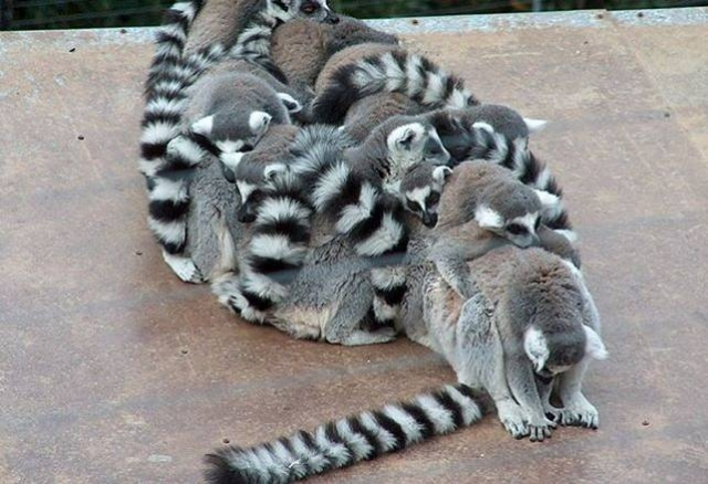 Забавные животные (43 фотки)