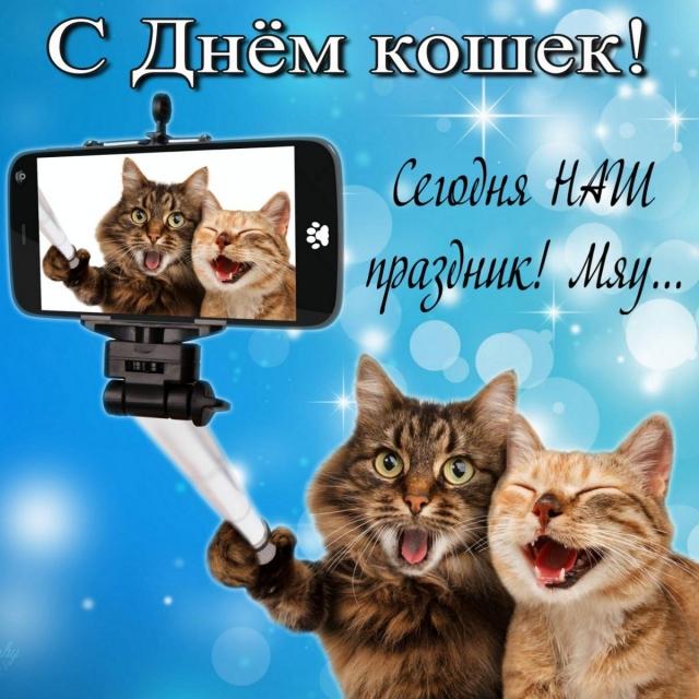 Результат пошуку зображень за запитом анимации всемирный день кошек 2020