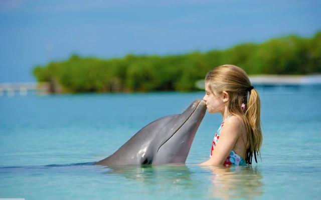 Дельфины - разумные существа, похожие на людей.