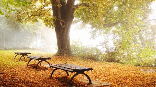 Обои на рабочий стол. Очаровательная осень. Часть 1