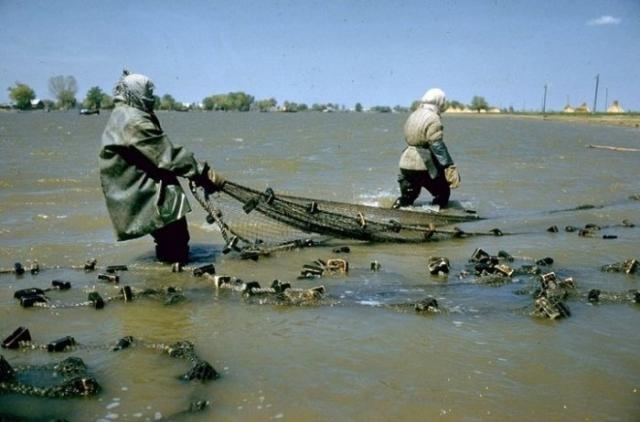 Рыболовы с сетью в дельте Волги. СССР, Астраханская область, 1960-е годы.
