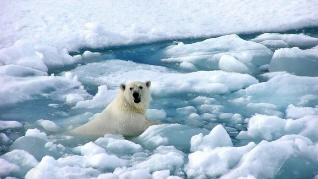 bear_polar_bear_ice_snow_cold_40336_3840x2160 (700x393, 136Kb)