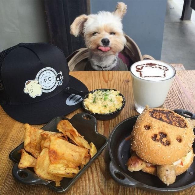 Фото: Эта когда-то бездомная собака теперь ходит в дорогие рестораны с хозяйкой (Фото)