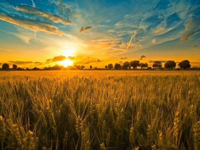 рассвет над полем