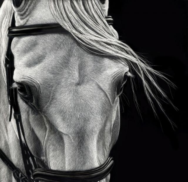 Американская художница создает великолепные портреты животный на протяжении 20-ти лет.