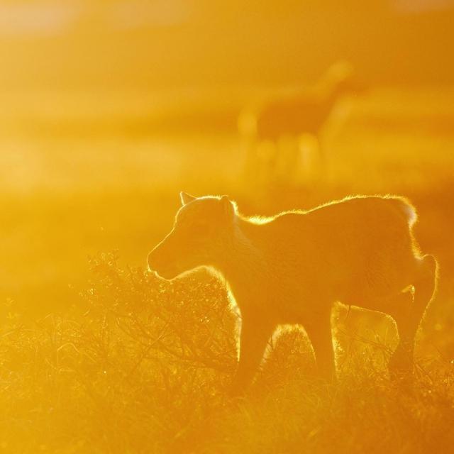 Дикие животные и природа в объективе Флориана Шульца