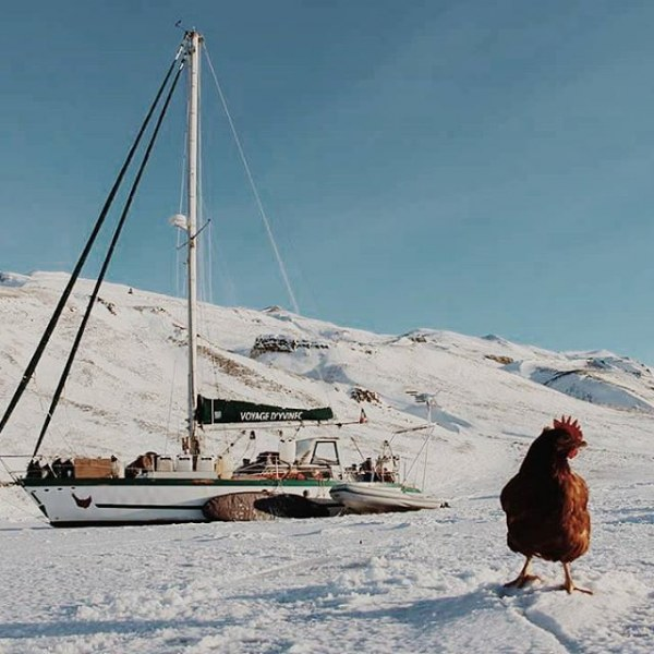 Парень путешествует по свету с курицей! (10 фото)