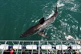 Город Гансбааи: лучшее место для свидания с белыми акулами
