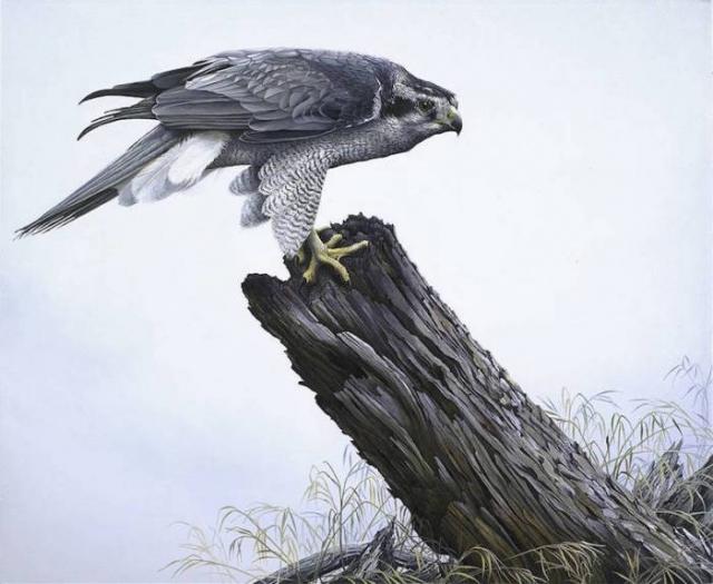 """Результат пошуку зображень за запитом """"Гиперреалистичные картины птиц. Художник Том Митал."""""""