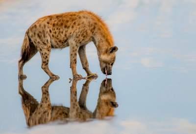 Дикая природа в лучших снимках со всей планеты. Фото