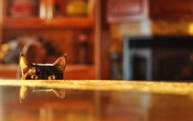 Затаившийся кот