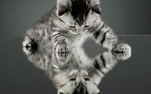 Красивые картинки на рабочий стол: Кошки (19 фото)