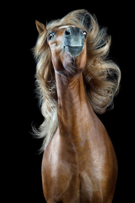 Доблестный принц. Автор: Wiebke Haas.