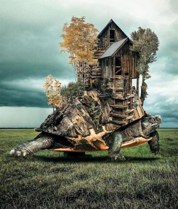Черепаший дом. Автор: Huseyin Sahin.