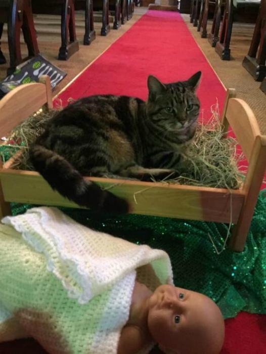 Кот в церкви.