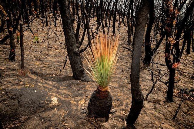 Результат пошуку зображень за запитом Природа ожила: чарующие снимки Австралии - фото.