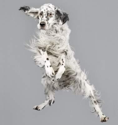 Вот так летают собаки. Фото